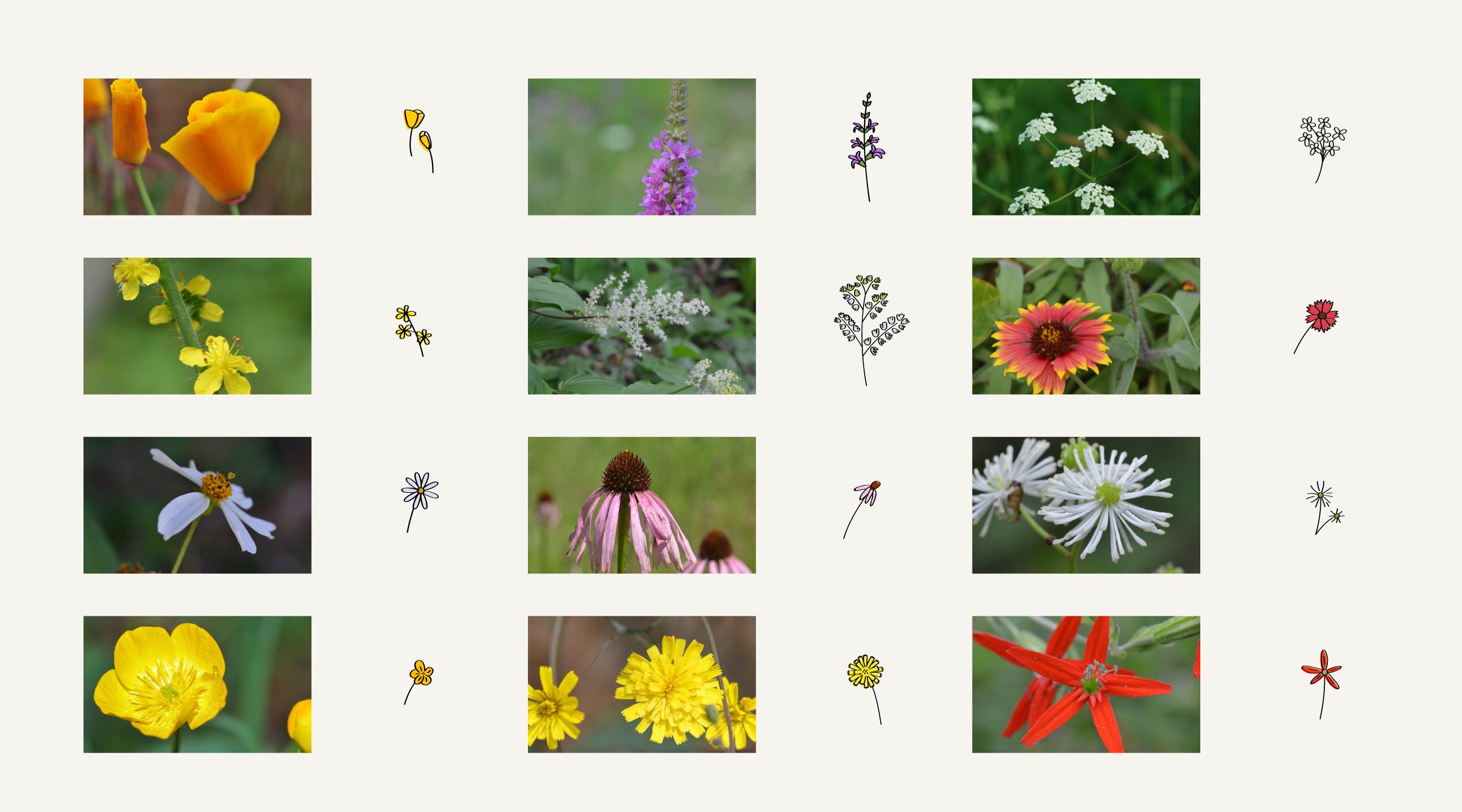 wild-flower-mapping